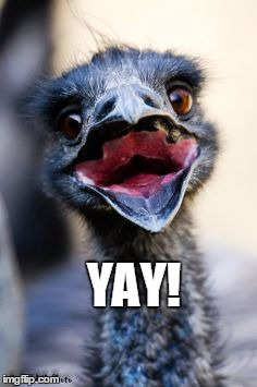 YAY! | image tagged in emu,derp | made w/ Imgflip meme maker