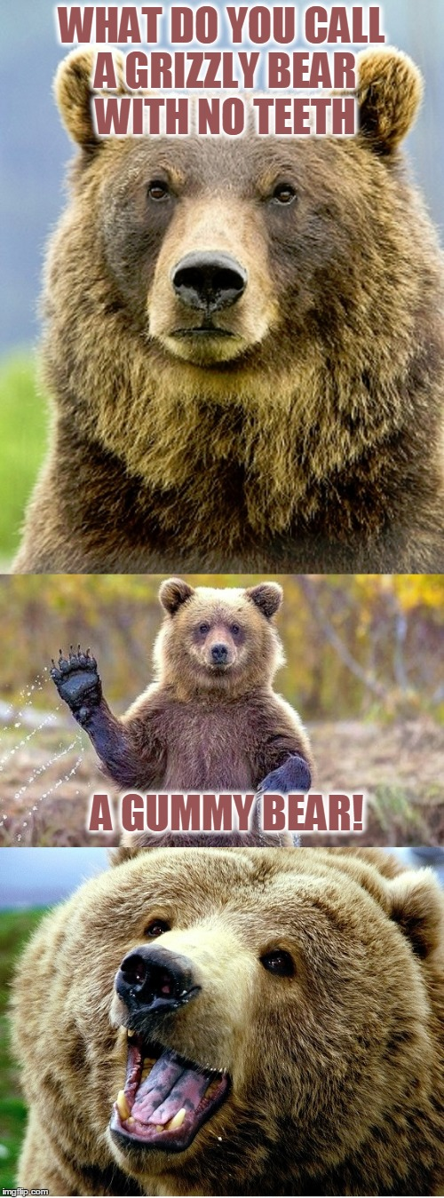 BAD PUN BEAR | WHAT DO YOU CALL A GRIZZLY BEAR WITH NO TEETH A GUMMY BEAR! | image tagged in bad pun bear,bad pun,funny,funny meme,puns,jokes | made w/ Imgflip meme maker