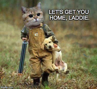 A Ruff Day... | LET'S GET YOU HOME, LADDIE. | image tagged in scottish,british,hunt,dog,lab,janey mack meme | made w/ Imgflip meme maker