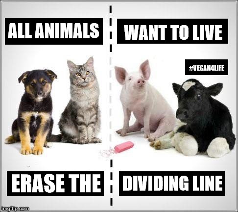 """Image with a picture of animals saying: """"all animals want to live - erase the dividing line"""""""