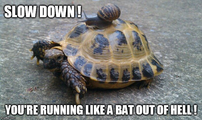 Snail riding turtle - Imgflip