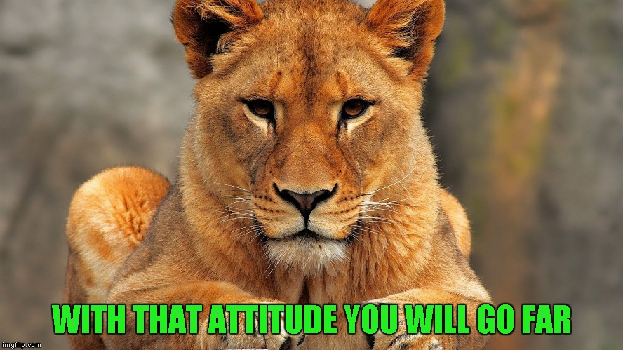 WITH THAT ATTITUDE YOU WILL GO FAR | made w/ Imgflip meme maker