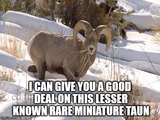 I CAN GIVE YOU A GOOD DEAL ON THIS LESSER KNOWN RARE MINIATURE TAUN | made w/ Imgflip meme maker