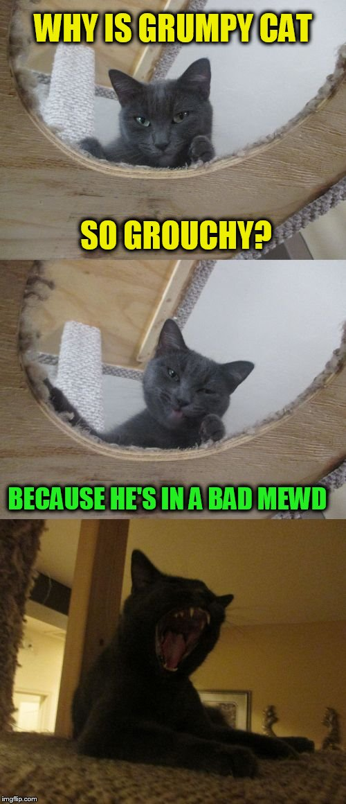 Bad Pun Cat (A gloria098 template) | SO GROUCHY? BECAUSE HE'S IN A BAD MEWD WHY IS GRUMPY CAT | image tagged in bad pun cat,grumpy cat,funny meme,cats,laughs,funny cats | made w/ Imgflip meme maker