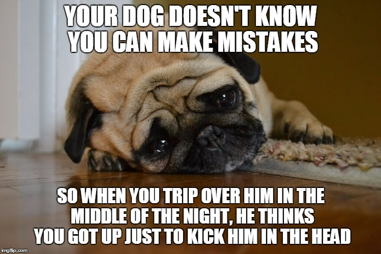 poor dogs | YOUR DOG DOESN'T KNOW YOU CAN MAKE MISTAKES SO WHEN YOU TRIP OVER HIM IN THE MIDDLE OF THE NIGHT, HE THINKS YOU GOT UP JUST TO KICK HIM IN T | image tagged in sad dog | made w/ Imgflip meme maker