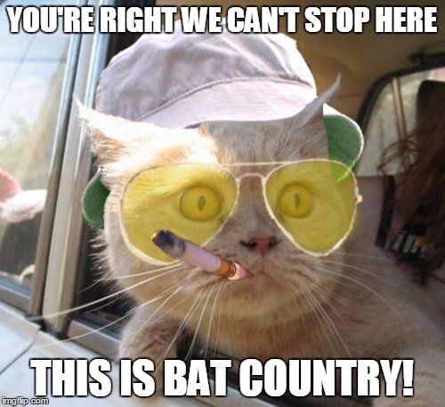 fear and loathing kitty | YOU'RE RIGHT WE CAN'T STOP HERE THIS IS BAT COUNTRY! | image tagged in fear and loathing kitty | made w/ Imgflip meme maker