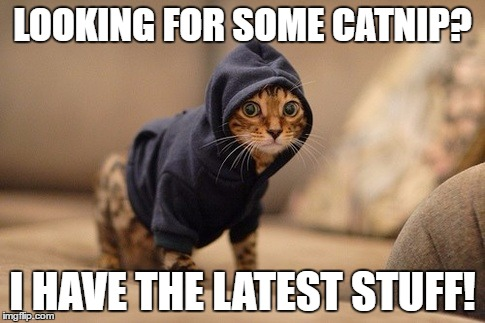 Dealing in the neighborhood | LOOKING FOR SOME CATNIP? I HAVE THE LATEST STUFF! | image tagged in memes,hoody cat,cats | made w/ Imgflip meme maker