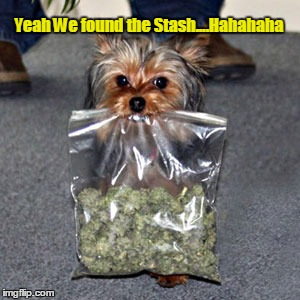 Yeah We found the Stash....Hahahaha | made w/ Imgflip meme maker