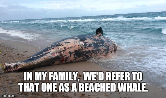 IN MY FAMILY,  WE'D REFER TO THAT ONE AS A BEACHED WHALE. | made w/ Imgflip meme maker