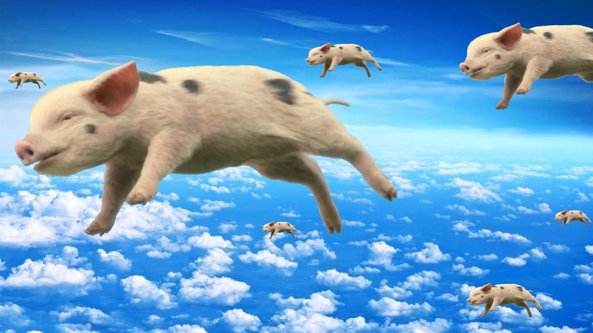 When Pigs Fly Meme Generator Imgflip