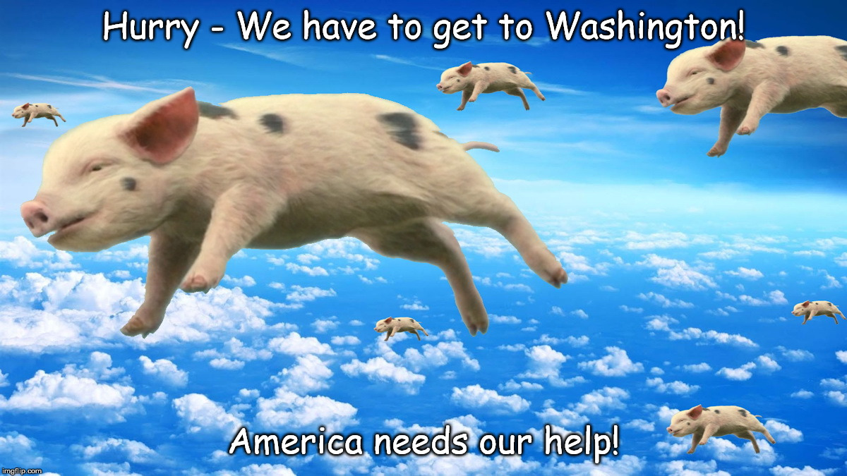 When Pigs Fly | Hurry - We have to get to Washington! America needs our help! | image tagged in when pigs fly | made w/ Imgflip meme maker