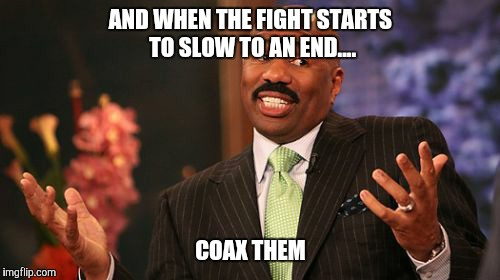 Steve Harvey Meme | AND WHEN THE FIGHT STARTS TO SLOW TO AN END.... COAX THEM | image tagged in memes,steve harvey | made w/ Imgflip meme maker