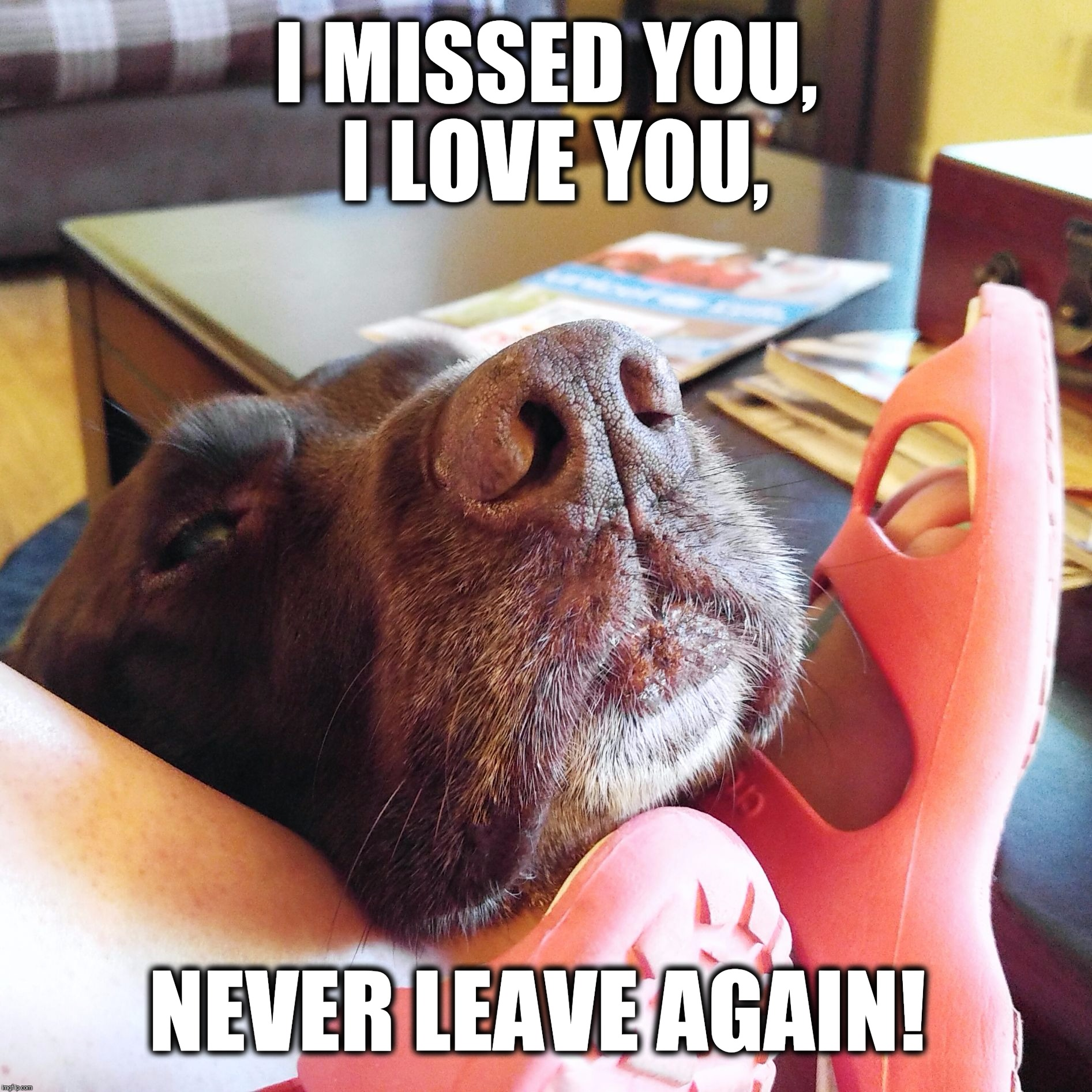 Never leave again!  |  I MISSED YOU, I LOVE YOU, NEVER LEAVE AGAIN! | image tagged in chuckie the chocolate lab,i love you,i missed you,never leave again,dog memes,labrador | made w/ Imgflip meme maker