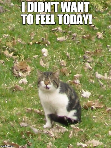 i caught the feels |  I DIDN'T WANT TO FEEL TODAY! | image tagged in memes,funny,cat,funny cat,cat memes,funny cat memes | made w/ Imgflip meme maker