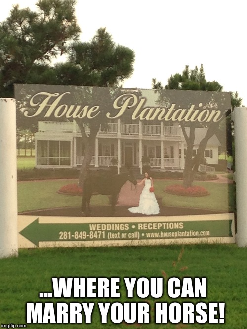 ...WHERE YOU CAN MARRY YOUR HORSE! | image tagged in redneck wedding | made w/ Imgflip meme maker