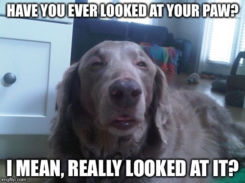 HAVE YOU EVER LOOKED AT YOUR PAW? I MEAN, REALLY LOOKED AT IT? | made w/ Imgflip meme maker