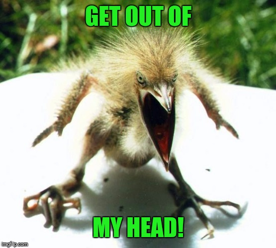 Unpleasant Bird | GET OUT OF MY HEAD! | image tagged in unpleasant bird | made w/ Imgflip meme maker