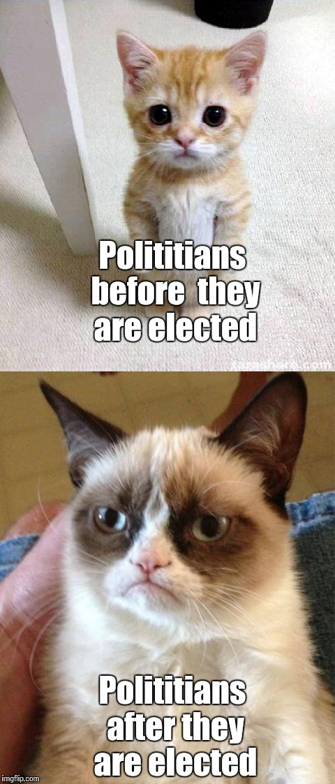 Cats | Polititians before  they are elected Polititians after they are elected | image tagged in memes,grumpy cat,trhtimmy | made w/ Imgflip meme maker