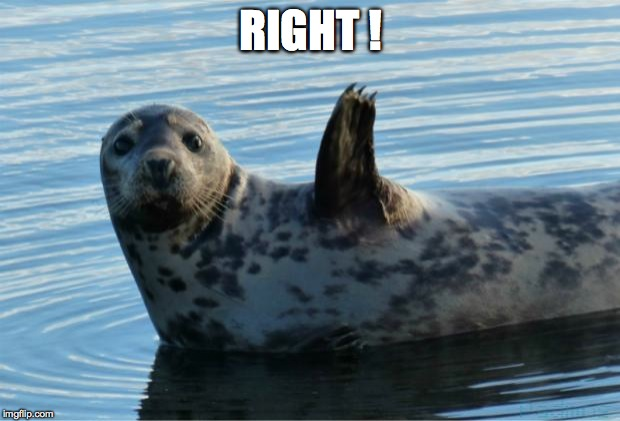 Seal | RIGHT ! | image tagged in seal | made w/ Imgflip meme maker