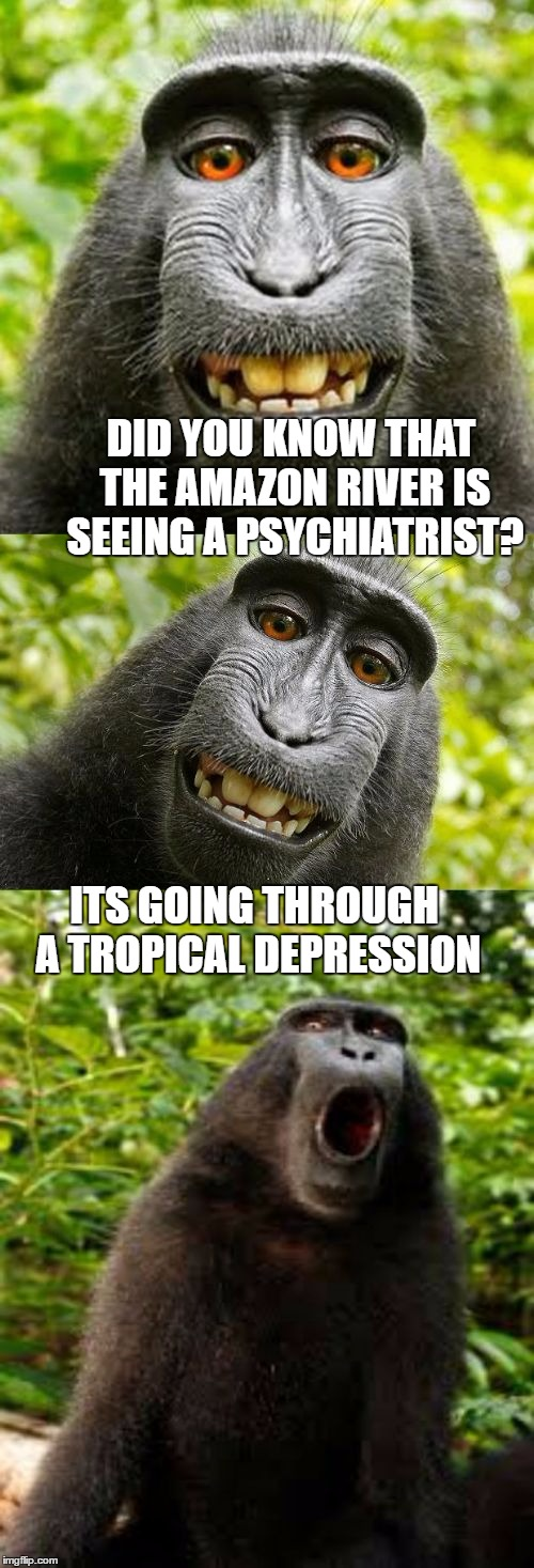 Depressed river basin | DID YOU KNOW THAT THE AMAZON RIVER IS SEEING A PSYCHIATRIST? ITS GOING THROUGH A TROPICAL DEPRESSION | image tagged in bad pun monkey,memes,amazon,river,depression,psychology | made w/ Imgflip meme maker