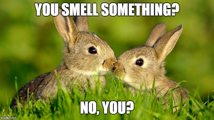 YOU SMELL SOMETHING? NO, YOU? | made w/ Imgflip meme maker
