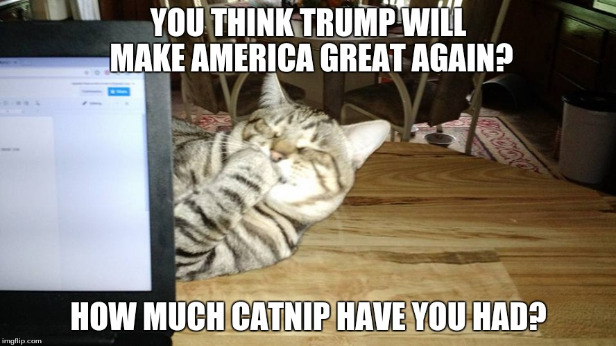 Trump Catnip |  YOU THINK TRUMP WILL MAKE AMERICA GREAT AGAIN? HOW MUCH CATNIP HAVE YOU HAD? | image tagged in trump 2016,donald trump,funny cat memes,election 2016,make america great again,cats | made w/ Imgflip meme maker