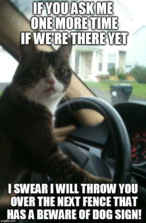19qjb0 jojo the driving cat imgflip