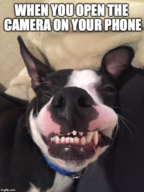 dog joke Memes & GIFs - Imgflip