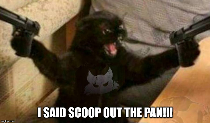 This Cat's Tired of Talking... | I SAID SCOOP OUT THE PAN!!! | image tagged in cat with guns,scoop,litter box | made w/ Imgflip meme maker