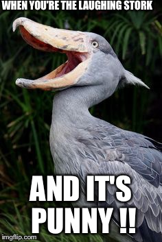 Laughing Stork |  WHEN YOU'RE THE LAUGHING STORK; AND IT'S PUNNY !! | image tagged in laughing stork,puns,funny,hahaha | made w/ Imgflip meme maker