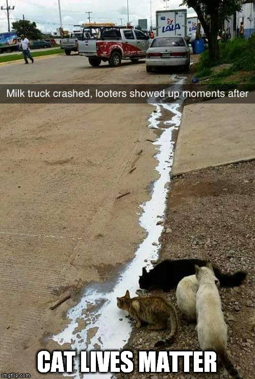 CAT LIVES MATTER |  CAT LIVES MATTER | image tagged in black lives matter,cats,milk,looters,looting | made w/ Imgflip meme maker