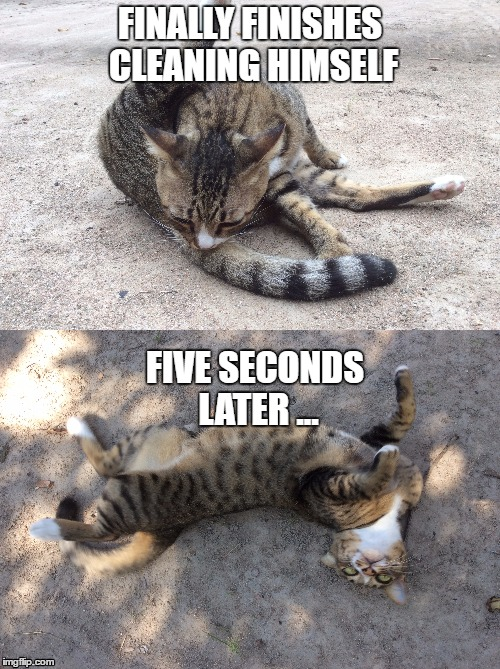 Cat rolls in dirt after cleaning himself | FINALLY FINISHES CLEANING HIMSELF FIVE SECONDS LATER ... | image tagged in cat,cat logic,tabby cat,cat cleaning,cat rolling,cat memes | made w/ Imgflip meme maker