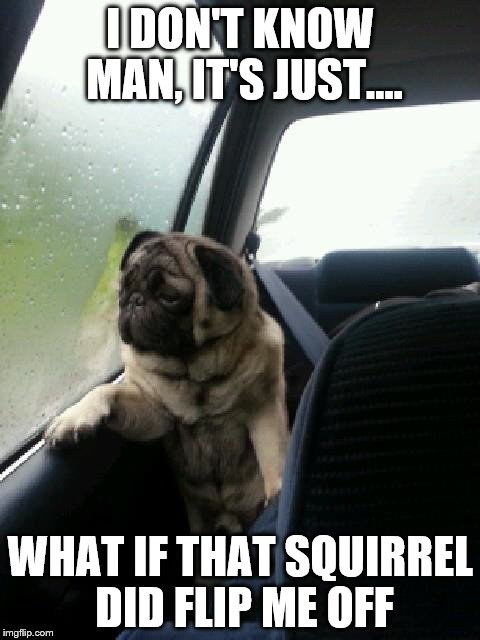 Early morning thought | I DON'T KNOW MAN, IT'S JUST.... WHAT IF THAT SQUIRREL DID FLIP ME OFF | image tagged in introspective pug,memes | made w/ Imgflip meme maker