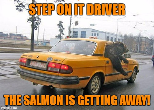 Meanwhile, in Russia... | STEP ON IT DRIVER THE SALMON IS GETTING AWAY! | image tagged in bear,cab,meme | made w/ Imgflip meme maker