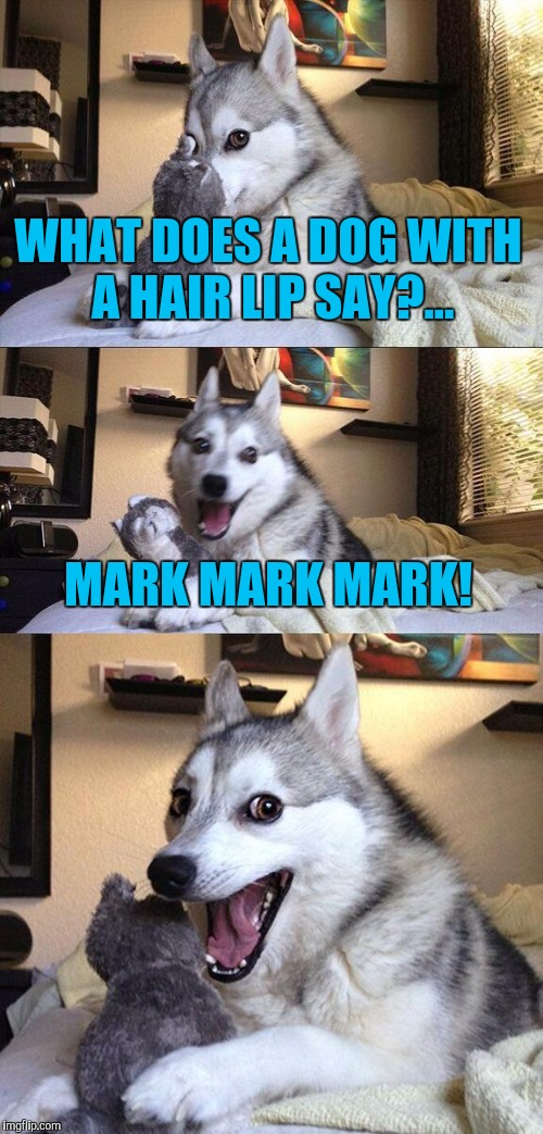 Bad Pun Dog Meme | WHAT DOES A DOG WITH A HAIR LIP SAY?... MARK MARK MARK! | image tagged in memes,bad pun dog | made w/ Imgflip meme maker