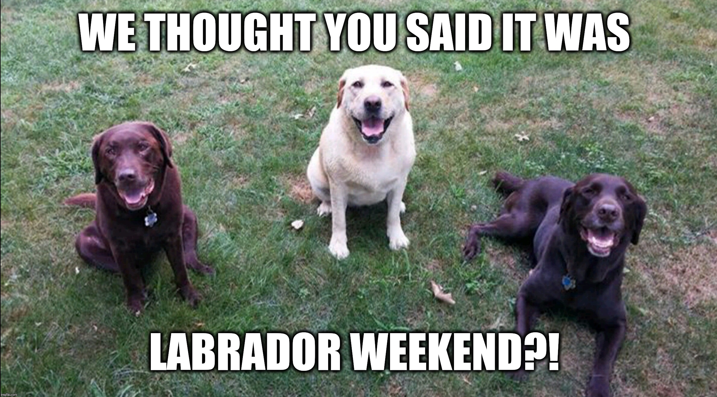 We thought you said it was Labrador weekend?!  |  WE THOUGHT YOU SAID IT WAS; LABRADOR WEEKEND?! | image tagged in labs,chuckie the chocolate lab,labor day,labrador,weekend,holiday | made w/ Imgflip meme maker