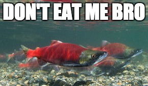 DON'T EAT ME BRO | image tagged in salmon,vegan | made w/ Imgflip meme maker