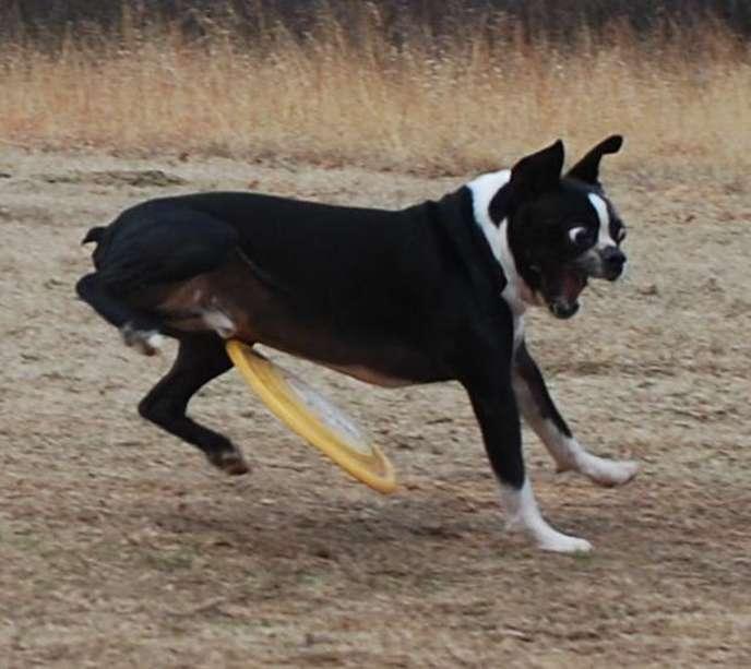 19ziti frisbee dog blank template imgflip