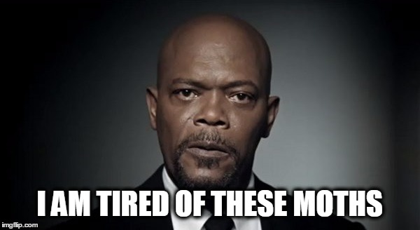 I AM TIRED OF THESE MOTHS | image tagged in samuel l jackson,moth,snakes on a plane | made w/ Imgflip meme maker