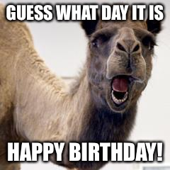Camel | GUESS WHAT DAY IT IS HAPPY BIRTHDAY! | image tagged in camel | made w/ Imgflip meme maker