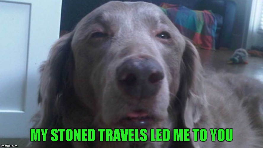 MY STONED TRAVELS LED ME TO YOU | made w/ Imgflip meme maker