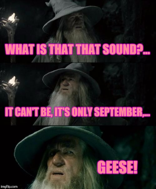 Being in northern B.C. this is happening a little sooner than back home. I don't like it. | WHAT IS THAT THAT SOUND?... IT CAN'T BE, IT'S ONLY SEPTEMBER,... GEESE! | image tagged in memes,confused gandalf,damn you fall,sewmyeyesshut | made w/ Imgflip meme maker