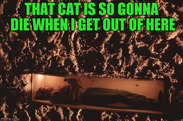 THAT CAT IS SO GONNA DIE WHEN I GET OUT OF HERE | made w/ Imgflip meme maker