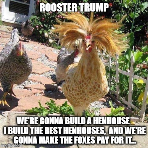 If Trump Was A Rooster... | ROOSTER TRUMP WE'RE GONNA BUILD A HENHOUSE  I BUILD THE BEST HENHOUSES,  AND WE'RE GONNA MAKE THE FOXES PAY FOR IT... | image tagged in trump rooster,trump wall,trump meme | made w/ Imgflip meme maker