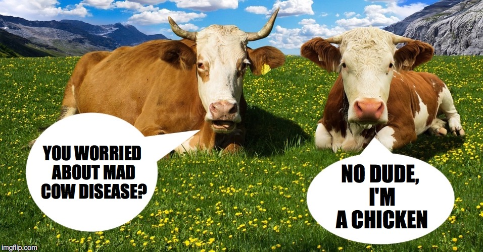 Mad Cow Disease. |  YOU WORRIED ABOUT MAD COW DISEASE? NO DUDE, I'M A CHICKEN | image tagged in mad,cow | made w/ Imgflip meme maker