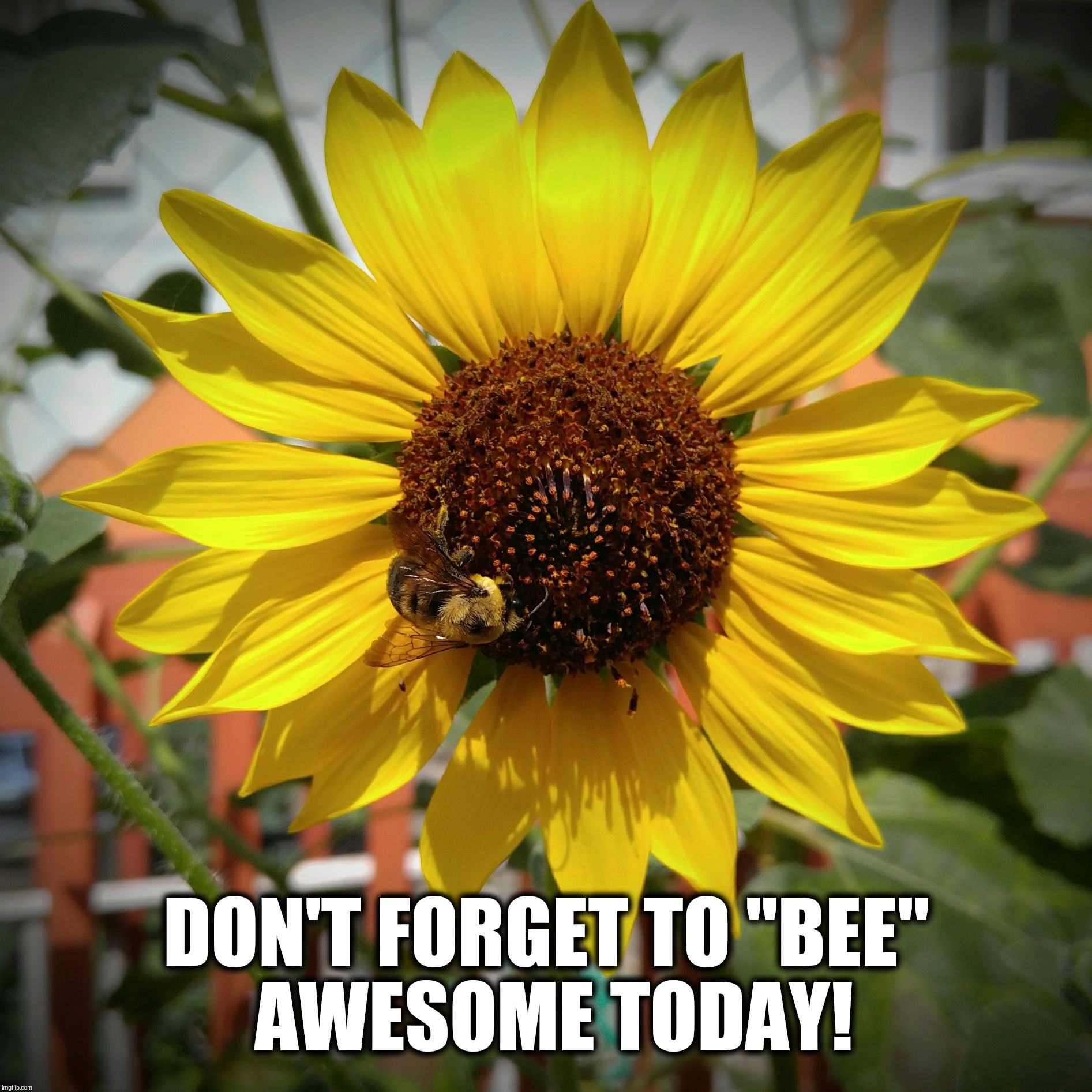 "Don't forget to bee awesome today!  | DON'T FORGET TO ""BEE""  AWESOME TODAY! 