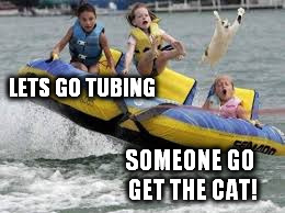 I mean really? Who says that? | LETS GO TUBING SOMEONE GO GET THE CAT! | image tagged in cats | made w/ Imgflip meme maker
