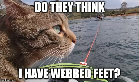 DO THEY THINK I HAVE WEBBED FEET? | made w/ Imgflip meme maker