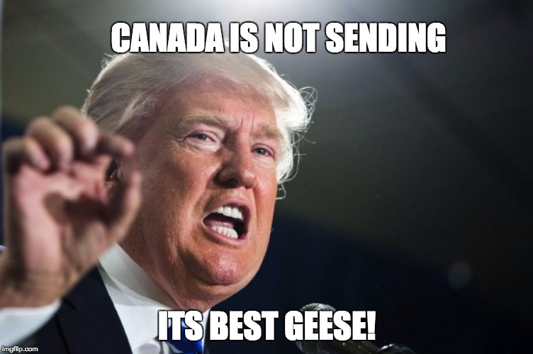 CANADA IS NOT SENDING ITS BEST GEESE! | made w/ Imgflip meme maker