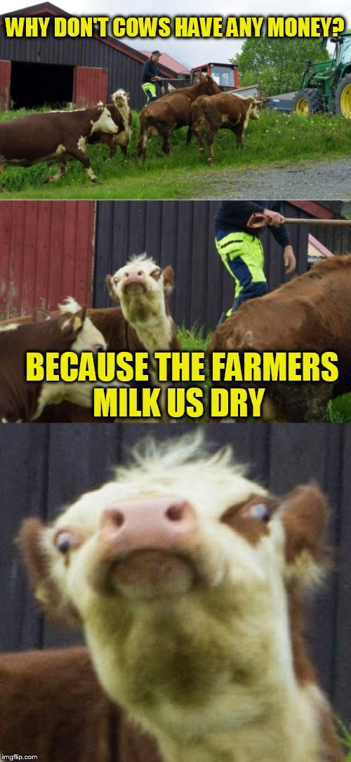 Bad pun cow  | WHY DON'T COWS HAVE ANY MONEY? BECAUSE THE FARMERS MILK US DRY | image tagged in bad pun cow,cows,funny memes,laughs,jokes,milk | made w/ Imgflip meme maker